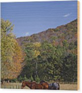 Horses And Autumn Landscape Wood Print