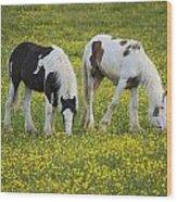 Horses Grazing, County Tyrone, Ireland Wood Print