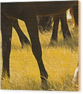 Horses Grazing Wood Print by Donovan Reese