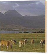 Horses Grazing, Macgillycuddys Reeks Wood Print