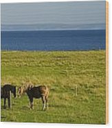 Horses In A Field, Guernsey Cove Wood Print