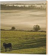 Horses In The Morning Mist, North Wood Print