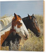 Horses In The Wild Wood Print