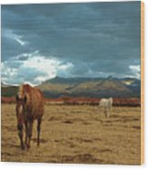 Horses In Winter Landscape  Truchas, New Mexico Wood Print by Mary Hockenbery