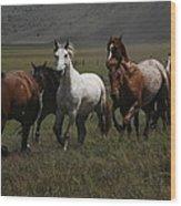 Horses Run Free Wood Print
