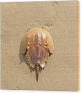 Horseshoe Crab In The Sand Campground Beach Cape Cod Eastham Ma Wood Print