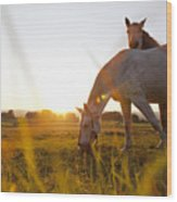Hose Grazing In Rural Field Wood Print