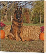 Hoss In Autumn II Wood Print