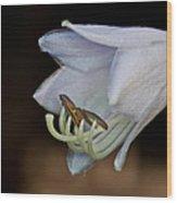 Hosta Blossom 1 Wood Print
