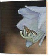 Hosta Blossom 2 Wood Print