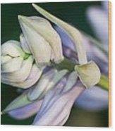 Hosta Blossoms Wood Print