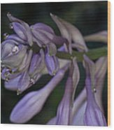 Hosta Blossoms With Dew Drops Wood Print