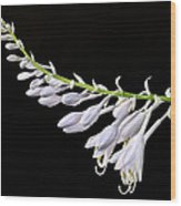 Hosta Flowers Wood Print