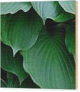 Hosta Green Wood Print