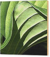 Hosta Leaf Wood Print