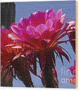Hot Pink Cactus Flowers Wood Print