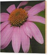 Hot Pink Coneflower Wood Print