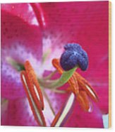 Hot Pink Lilly Up Close Wood Print