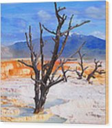 Hot Spring Trees Wood Print