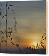 Hot Sunset Wood Print