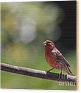 House Finch Bird . 40d7605 Wood Print