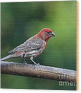 House Finch Bird . 40d8331 Wood Print by Wingsdomain Art and Photography