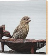 House Finch Eating Jelly Wood Print