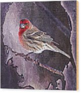 House Finch Looking At Me Wood Print