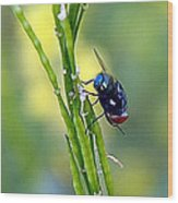 House Fly On Mustard Stem Wood Print