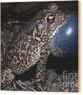 Houston Toad Wood Print