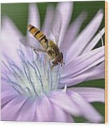 Hoverfly On Flower Wood Print