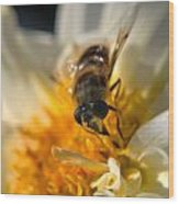 Hoverfly On White Flower Wood Print