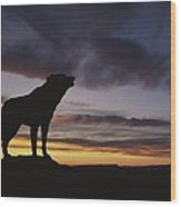 Howling Wolf Silhouetted Against Sunset Wood Print
