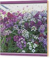 Hues Of Purple Phlox Wood Print