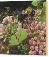 Huge Bumble Bee Wood Print