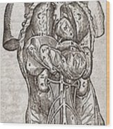 Human Male Torso, 16th Century Wood Print by Middle Temple Library