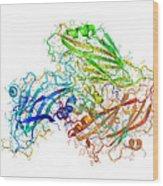 Human Rhinovirus Capsid Proteins Wood Print