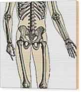 Human Skeleton Wood Print