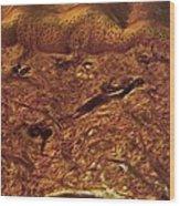 Human Skin, Light Micrograph Wood Print by Robert Markus