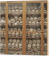Human Skulls And Femurs Fill A Display Wood Print by Tino Soriano