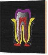 Human Tooth Anatomy, Artwork Wood Print