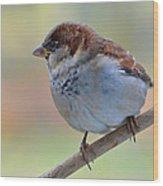 Humble Housesparrow Wood Print