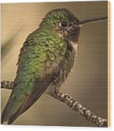 Humming Bird On Branch Wood Print