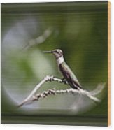 Hummingbird - Bird Wood Print