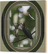 Hummingbird - Card - Glint Of The Eye Wood Print