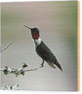 Hummingbird - Just The Tip Wood Print