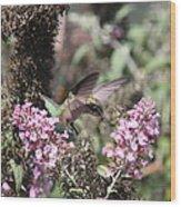 Hummingbird - Ruby-throated Hummingbird - Chopper Wood Print