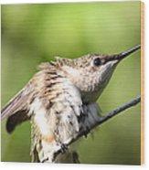 Hummingbird - Ruby-throated Hummingbird - Stretch Time Wood Print