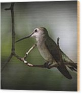 Hummingbird - Under The Canopy Wood Print
