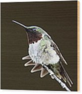 Hummingbird - Wide Tail Wood Print